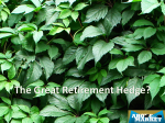 Retirement Hedge 11